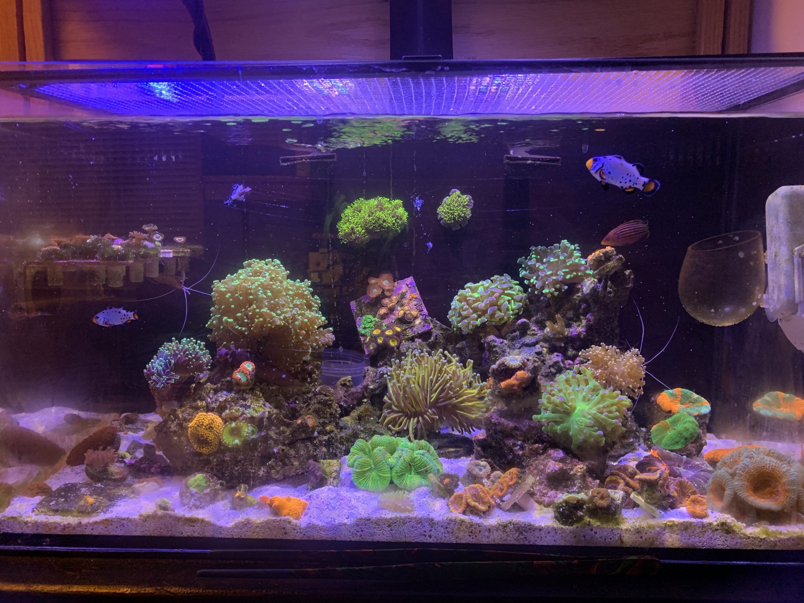 The MOST Important Aspect of a Reef Tank
