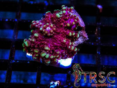 Mushroom _N01