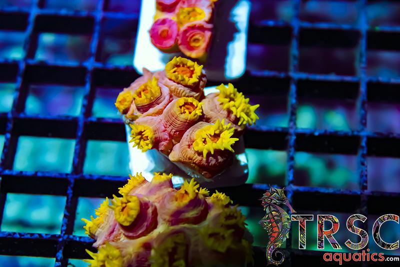 NPS Corals