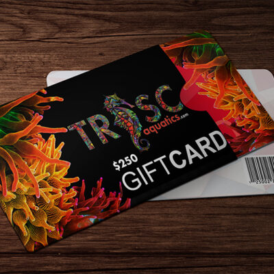 TRSC 250 Dollar Gift Card TRSC Gear & Accessories LPS, SPS, Softies, Zoanthid Corals Online